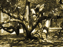 spöklik tree Arkivfoto