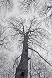 spöklik vinter för skog Royaltyfri Fotografi