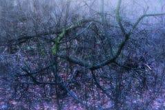 Spöklika Forest Branches Arkivbild