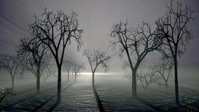 Spöklika träd och dimmaplats royaltyfri foto