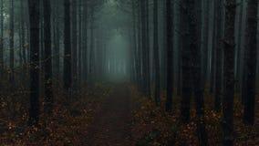 Spöklika trän nära Montana, Bulgarien Arkivfoton