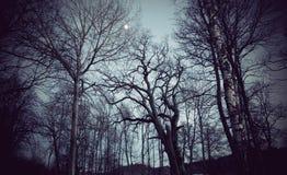 Spöklika trees Arkivfoto