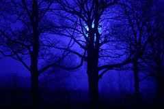 spöklika trees för natt Arkivbild