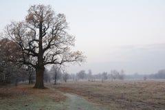 Spöklikt se och gammal ek i vinter med inga sidor som endast precis är synliga till och med tjock dimma Arkivfoto