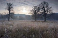 Spöklikt se och gammal ek i vinter med inga sidor som endast precis är synliga till och med tjock dimma Royaltyfria Foton