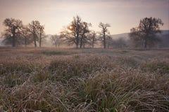 Spöklikt se och gammal ek i vinter med inga sidor som endast precis är synliga till och med tjock dimma Fotografering för Bildbyråer