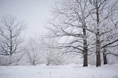 Spöklikt se och gammal ek i vinter med inga sidor som endast precis är synliga till och med tjock dimma Royaltyfri Bild