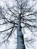 Spöklikt träd som täckas med insnöad vinter arkivbilder
