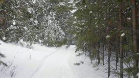 Spüren Sie heraus den Transportwagen auf, der vom Tannenkieferwald auf Winterweileschneefälle geschossen wird stock footage