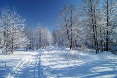 Spüren Sie nach links durch Skis im schönen Holz im Winter auf Stockfotografie