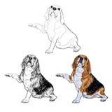 Lustige Haltung des Spürhunds Lizenzfreies Stockbild