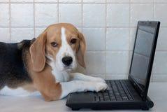 Spürhund mit Laptop Lizenzfreie Stockbilder