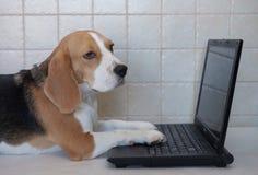 Spürhund mit Laptop Lizenzfreies Stockbild