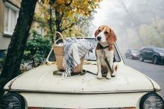 Spürhund am Strand, Oregon haustiere Bester Freund lizenzfreies stockbild