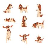 Spürhundhund im verschiedenen Haltungssatz, nette lustige Tierzeichentrickfilm-figur-Vektor Illustration auf einem weißen Hinterg stock abbildung