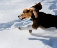 Spürhundwelpe im Schnee Lizenzfreies Stockbild