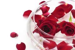 spławowa czerwień wzrastał Zdjęcie Royalty Free