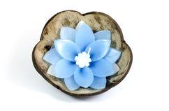 Spławowa kwiat świeczka Fotografia Royalty Free