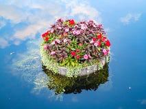 Spławowa roślina obrazy stock
