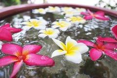 spławowego kwiatów frangipani horyzontalna strzału woda Zdjęcie Royalty Free