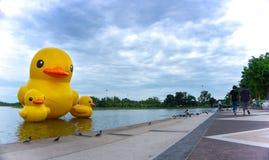 Spławowy żółty gumowy kaczka balonu pławik na jeziorze fotografia stock