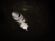 Spławowy gołębia piórko na wodzie Zdjęcie Royalty Free