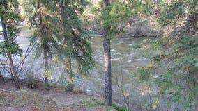 Spływanie rzeka w północnym Canada zdjęcie wideo