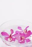spławowe kierownicze storczykowe purpury Obraz Royalty Free