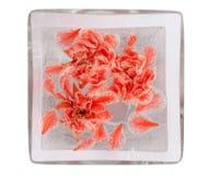 spławowych kwiatów czerwona tropikalna woda Zdjęcia Stock