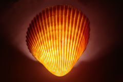 SP de Cardita del Seashell Foto de archivo