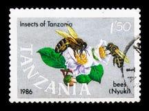 SP de Honey Bee Apis , Insectos del serie de Tanzania, circa 1987 Fotografía de archivo libre de regalías