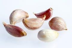 Sp do Allium Fotografia de Stock