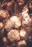 Sp do Allium Imagens de Stock Royalty Free