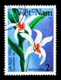 Sp do Cymbidium , Serie das orquídeas, cerca de 1984 Imagens de Stock