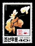 Sp do Phalaenopsis , Serie internacional de Canadá Montreal do festival do selo, cerca de 1991 Imagem de Stock Royalty Free