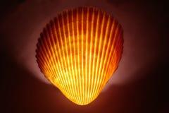 sp seashell cardita Стоковое Фото