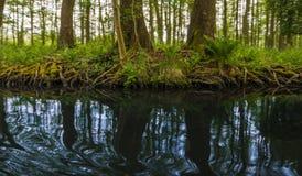 Spływowej linii bomblowania las blisko Berlin Fotografia Stock