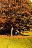 Spaß in den Blättern haben stockbilder