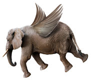 Spaß-Fliegen-Elefant mit den Flügeln lokalisiert lizenzfreies stockfoto