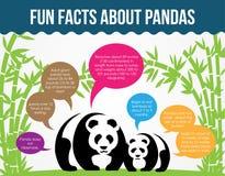 Spaß-Tatsachen über Pandas Flacher Infographic-Vektor Lizenzfreie Stockfotos