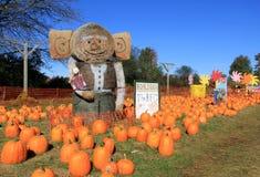 Spaßkürbis-Fleckenanzeige, Sunnyside-Gärten, Saratoga Springs, New York, Fall, 2014 Lizenzfreies Stockfoto
