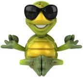 Spaßschildkröte Stockbild