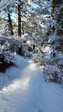 Spaßschneetag im Wintermärchenland stockbild