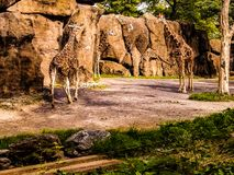 Spaßtag am Zoo Stockbilder