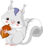 Spaßzoo. Weißes Eichhörnchen Stockfoto