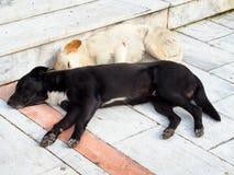 Spać psy zdjęcie stock