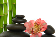 Spa. Bamboo stem ,flower and zen  stones Stock Images
