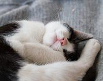 spać Fotografia Royalty Free