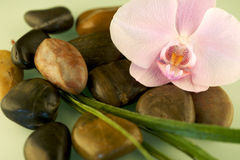 At the Spa. Massage stones and flower, copy space Royalty Free Stock Photos