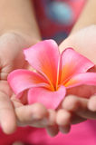 Spa. Beautiful girl hands holding flower Stock Photography